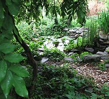 Private Gourley Garden  Pond - Anole Lizard Habitat by JeffeeArt4u