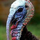 Turkey by Lolabud