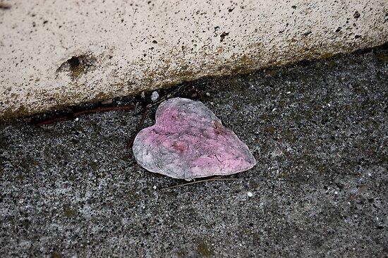 Paper heart by Amanda Huggins