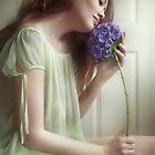 hydrangea by Vanessa Ho