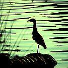 A crane on a drain by Amanda Huggins