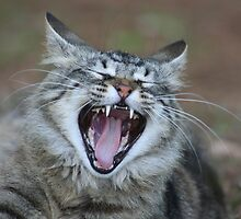 Yawning Cat by DebbieCHayes