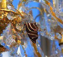 Sleeping Under the Stars - Krohn Butterfly Show by Tony Wilder