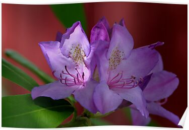 Azalea In A Sunshine Spotlight by Gene Walls