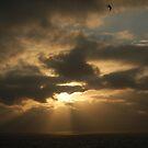 sun-bird by JimSanders