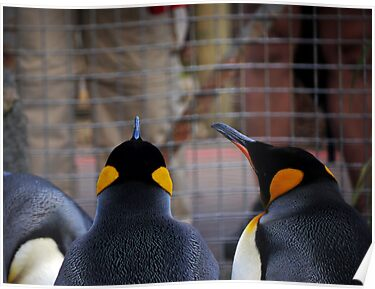 Role Reversal: Penguins at the Human Enclosure by Ryan Davison Crisp