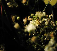 Gypsophila - Valentine's Day 2010 by Courtney Robison
