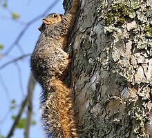 Baby squirrel climbing the tree by mltrue