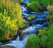 Stream in Paradise by Inge Johnsson