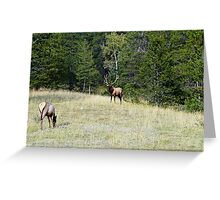 The Warden - Bull Elk and Cow Greeting Card
