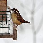 Carolina Wren in the Snow by Susan Blevins