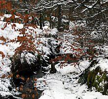 Winter Wonderland by Naturesview