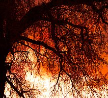 Burning tree by Bo Insogna