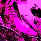 Purple pelicans by Amanda Huggins