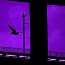 Flying like a pelican by Amanda Huggins