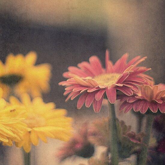 Flower Power by JurrPhotography