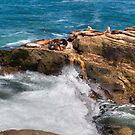 La Jolla Cove Seals by Bill McCarroll