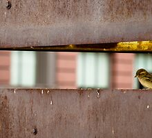 Bird on High Line Park by sidyam