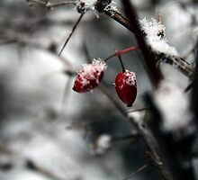 Red Berries in White by Toby Davis