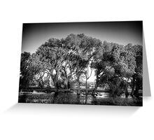 Big Trees(small snakes) Greeting Card