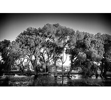 Big Trees(small snakes) Photographic Print