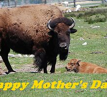 Bison Happy Mother's Day To All! by Jonice