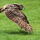 Eurasian Eagle-owl - in flight by Gili Orr
