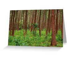 Forest and bushes in Zambales, Philippines Greeting Card
