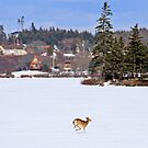 Deer Crossing the Lake by Debbie  Roberts