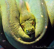 Green Coil by grebeh