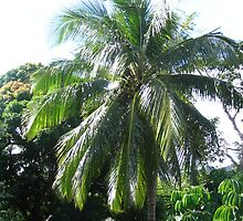 Palm Tree in Fiji - Close up by Camelot
