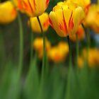 Van Gogh Tulips by Pardus
