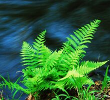 Fern by the Creek by Tori Snow