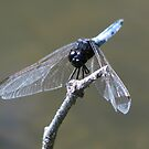 Dragonfly On A Stick by PhoenixArt