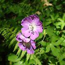 Purple Flowers by KarasuHachidori