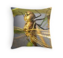 Dragon-fly Macro. Throw Pillow