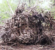 Roots by Vegotsky