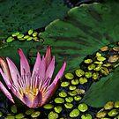 Zen by Jamie Lee