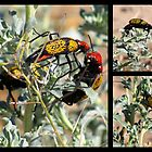 Iron-Cross Blister Beetle ~ Collage by Kimberly Chadwick