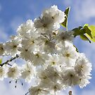 Blossom In The Sky by Lynne Morris