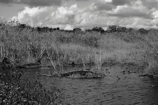 Gator on Island by Dian  Squire