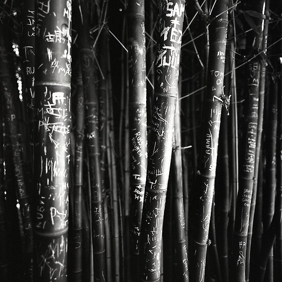 scarred bamboo by Tony Kearney