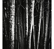 scarred bamboo Photographic Print