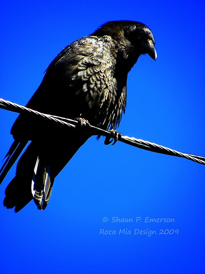 Nevermore by rocamiadesign