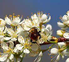 Ru-Bee by Melzo318