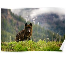 Black Wolf in Yellowstone National Park Poster