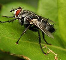The Fly by Ann  Van Breemen