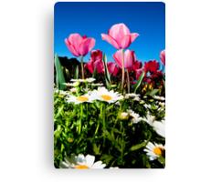 Capital Tulips Canvas Print