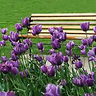 Sitting By The Bench by Linda Miller Gesualdo