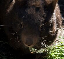 A Wombat Named Florence by Daniel Berends